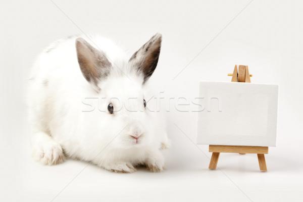 Сток-фото: Пасху · животные · праздник · трава · природы · яйцо
