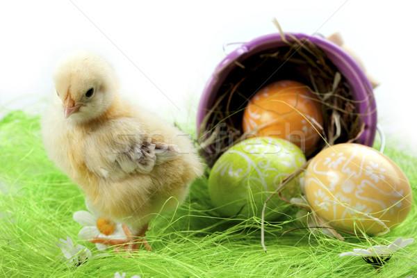 Сток-фото: Пасху · куриные · праздник · трава · природы · яйцо