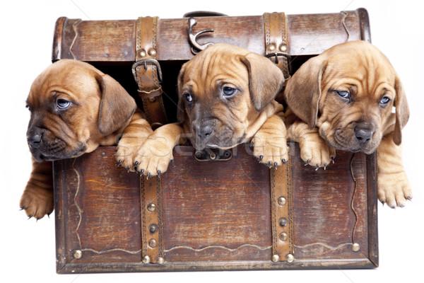 Сток-фото: молодые · Cute · собаки · группа · смешные · белый