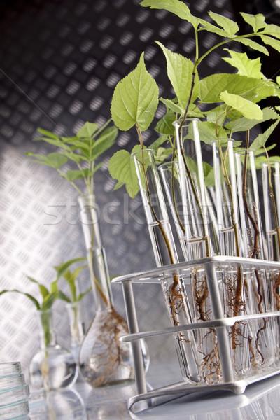 Plants in laboratory. Genetic science Stock photo © BrunoWeltmann