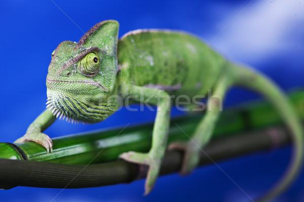Zöld vulkán színes fotó fa Stock fotó © BrunoWeltmann