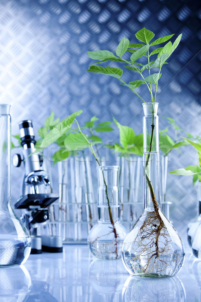 plant biotechnology Although modern biotechnology is based on advances in molecular genetics and recombinant dna technology, exploitation of these advances in plants has been facilitated by two other established.