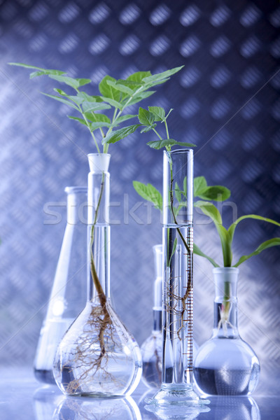 Semis laboratoire plantes nature verre fond Photo stock © BrunoWeltmann