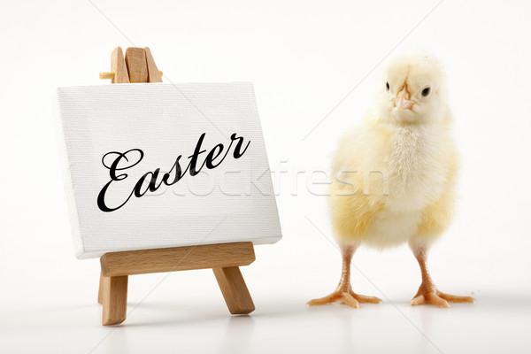 Foto stock: Pascua · pollo · vacaciones · hierba · naturaleza · huevo