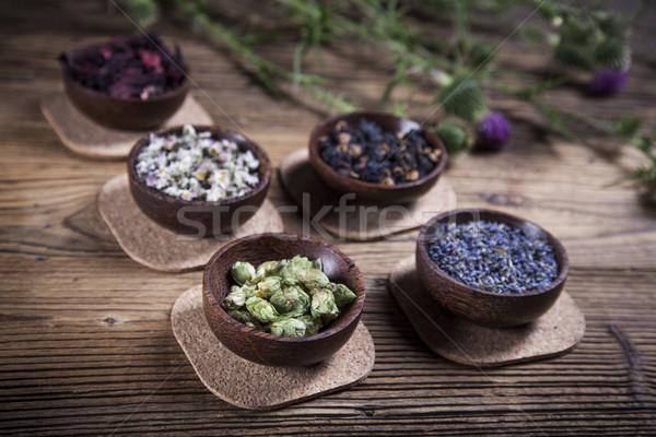 Stok fotoğraf: Eski · Çin · tıbbı · otlar · doğal · çiçekler · çiçek