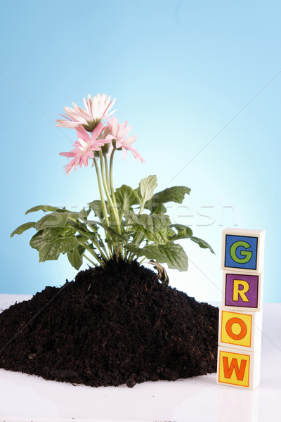 Jardinagem grama jardim ferramenta semente pote Foto stock © BrunoWeltmann