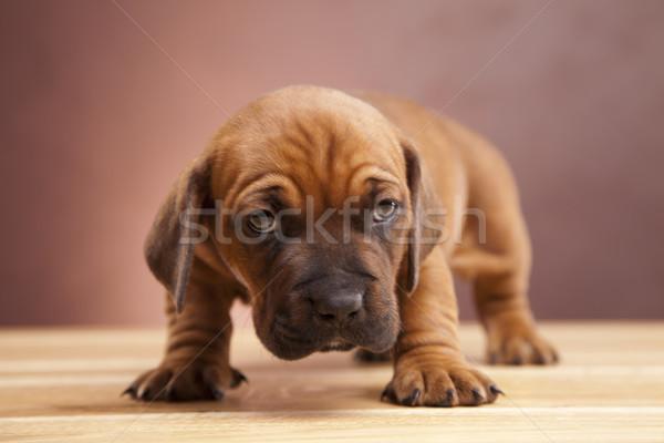 Stock fotó: Fiatal · aranyos · kutyák · boldog · csoport · vicces