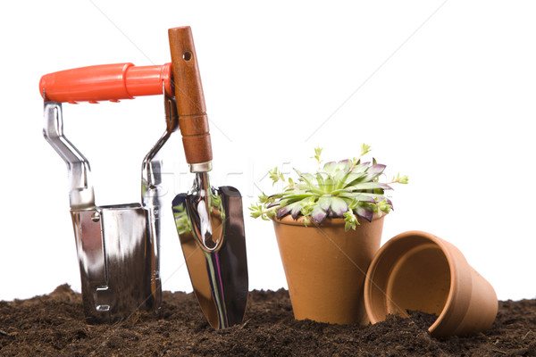 Stock photo: Flowers and garden tools