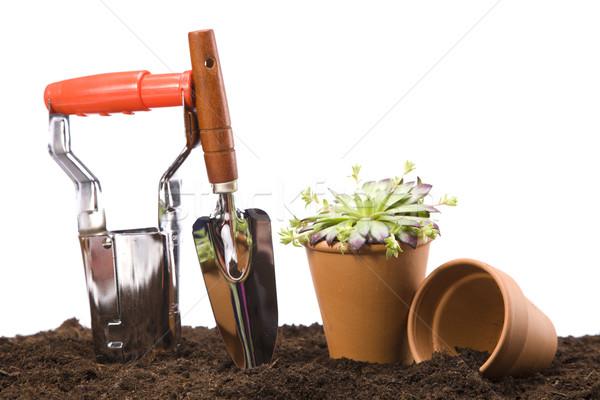 Flores jardim ferramentas céu grama vida Foto stock © BrunoWeltmann