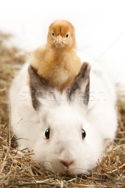 Húsvét állatok ünnep fű természet asztal Stock fotó © BrunoWeltmann