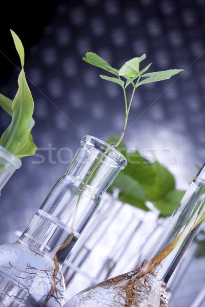 Foto stock: Plantas · laboratório · genético · ciência · flor · médico