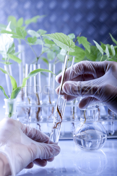 Plants in laboratory. Genetic science Stock photo © BrunoWeltmann