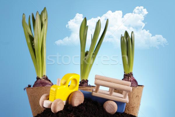 Gardening concept Stock photo © BrunoWeltmann