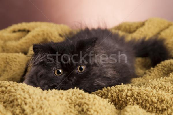 小さな 猫 白 スタジオ 子猫 ペット ストックフォト © BrunoWeltmann