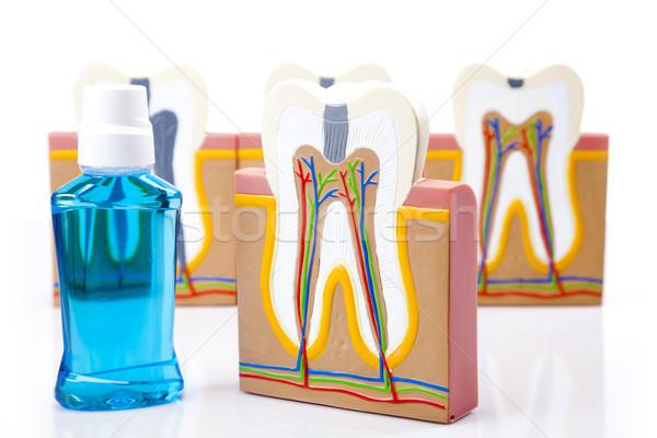 Equipamentos odontológicos dentes cuidar controlar estúdio escritório Foto stock © BrunoWeltmann