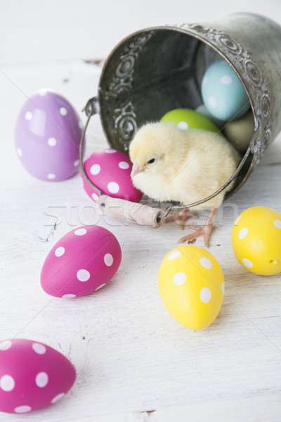 Easter chicken, eggs and decoration on white background Stock photo © BrunoWeltmann