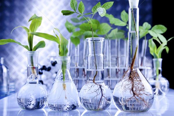Seedlings in laboratory Stock photo © BrunoWeltmann