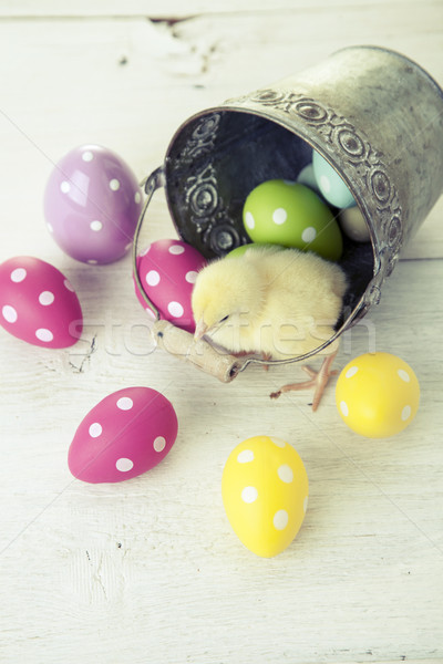 Stock photo: Easter chicken, eggs and decoration on white background