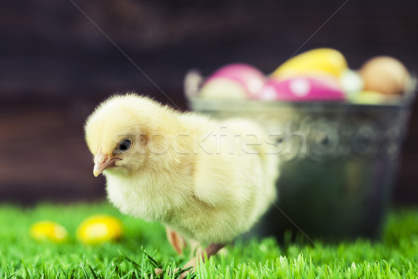 Bucket full of easter eggs and chicken Stock photo © BrunoWeltmann