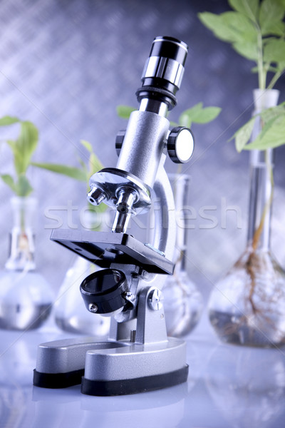 Plante laborator genetic ştiinţă medical natură Imagine de stoc © BrunoWeltmann