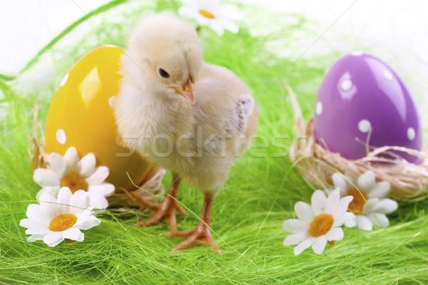 Stock fotó: Húsvét · tyúk · ünnep · fű · természet · tojás