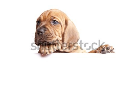 Jovem bonitinho cães grupo engraçado cartão Foto stock © BrunoWeltmann