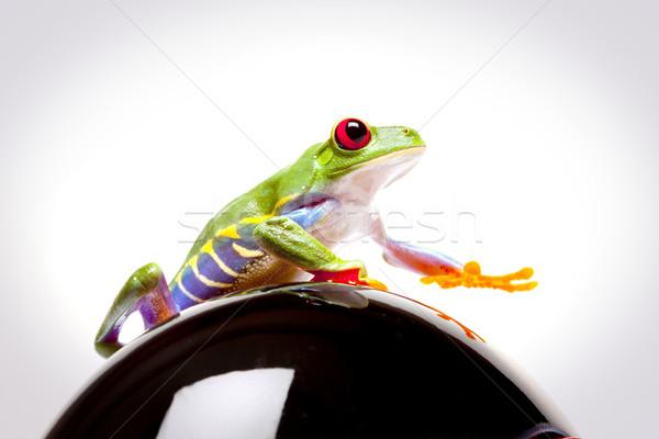 Green Frog in concepts Stock photo © BrunoWeltmann