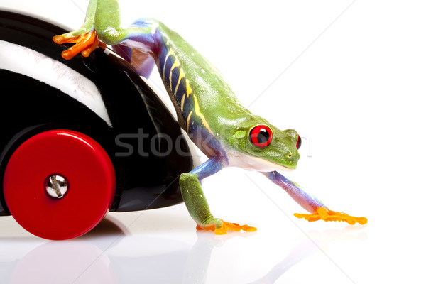 Green Frog in concepts Stock photo © BrunoWeltmann