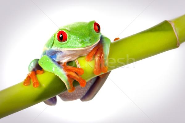Stok fotoğraf: Yeşil · kurbağa · göz · turuncu · kırmızı · taş