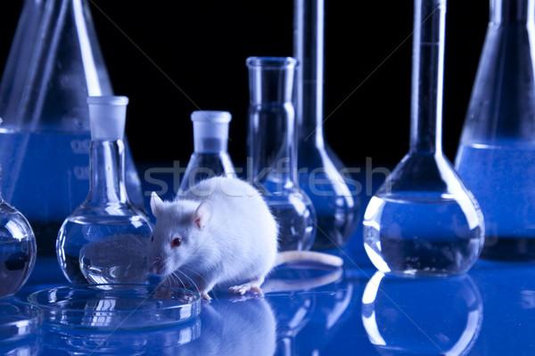 животного черный лаборатория белый крыса пробирку Сток-фото © BrunoWeltmann