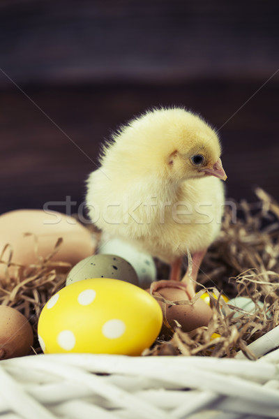 Easter chicken, eggs and decorations Stock photo © BrunoWeltmann