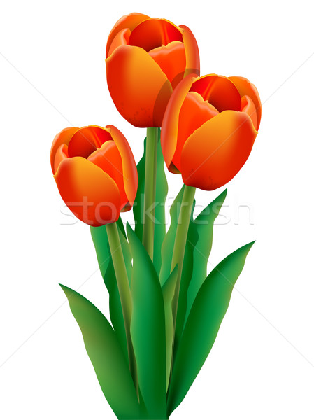 tulip Stock photo © brux
