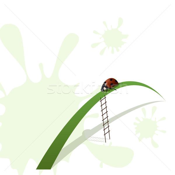 Biedronka klatka schodowa ilustracja ostrze trawy Zdjęcia stock © brux