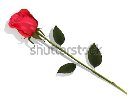 Aumentó ilustración rosas rojas pintura en aerosol blanco flor Foto stock © brux