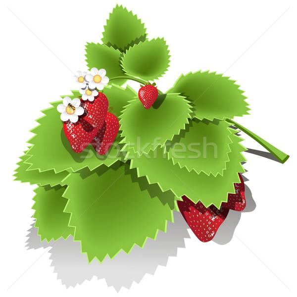 клубника иллюстрация красный Bee фрукты Сток-фото © brux
