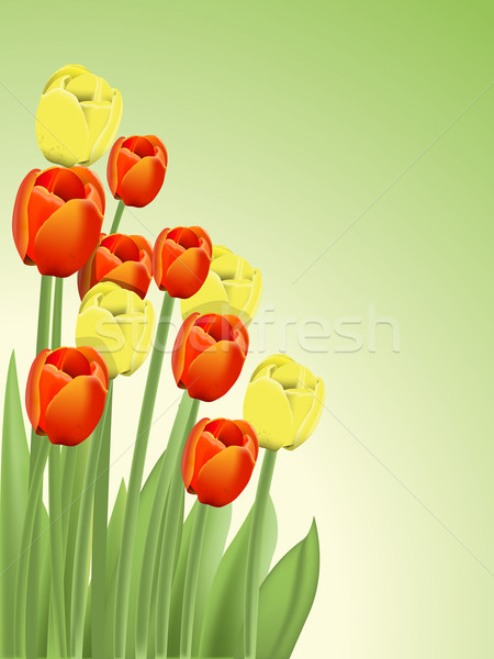 тюльпаны иллюстрация букет красный желтый весны Сток-фото © brux