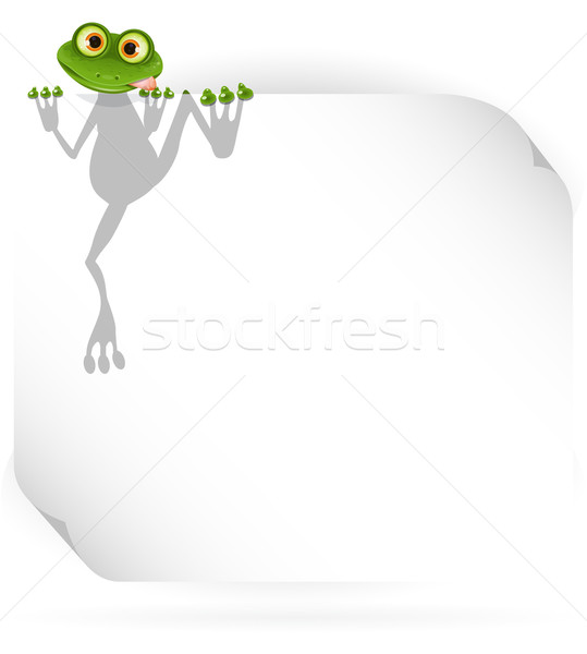 Frog and white background Stock photo © brux