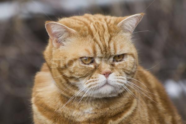 cat in nature Stock photo © brux