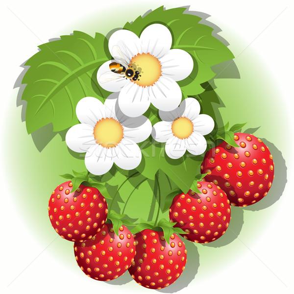 Fraise illustration rouge fleur blanche abeille fruits Photo stock © brux
