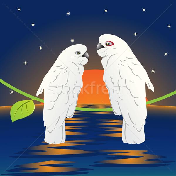 Papuga ilustracja pary biały zachód słońca miłości Zdjęcia stock © brux