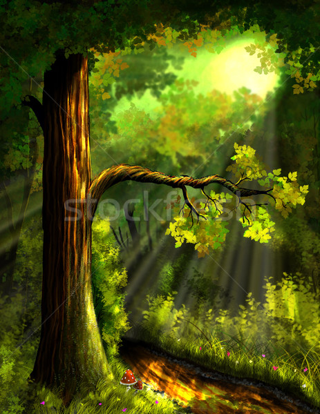 forest Stock photo © brux