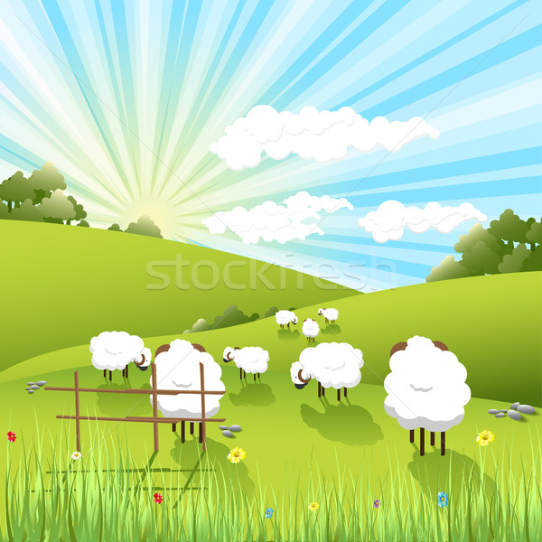 sheeps Stock photo © brux