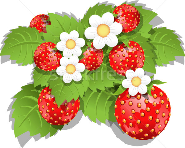 strawberry bush Stock photo © brux