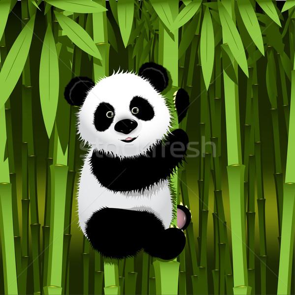 Panda ilustracja ciekawy trzon bambusa oka Zdjęcia stock © brux