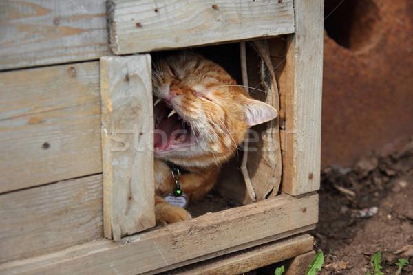 ásít macska visel alszik állat Stock fotó © brux