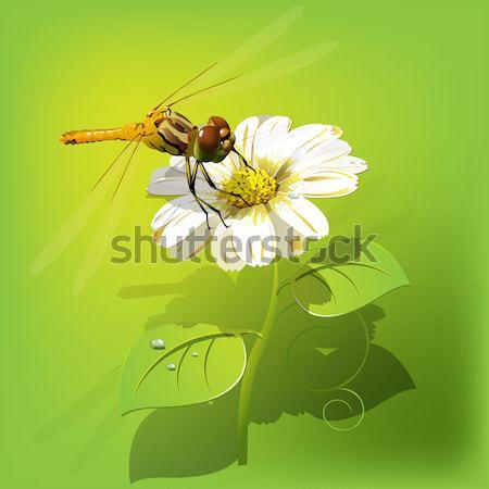 トンボ 花 実例 白い花 緑 自然 ストックフォト © brux