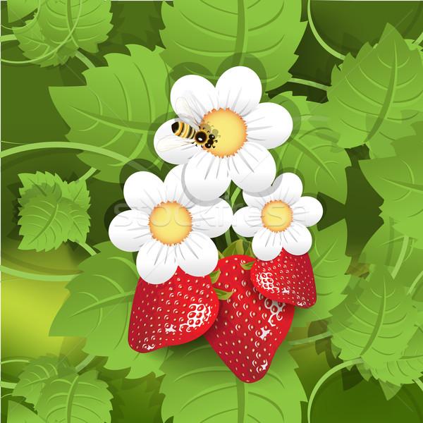 strawberry Stock photo © brux