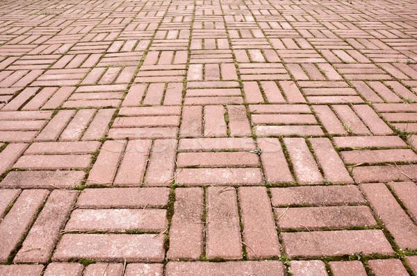 舗装 タイル 観点 苔 テクスチャ 抽象的な ストックフォト © bryndin