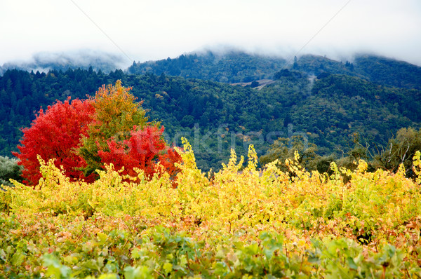 秋 明るい 黄色 畑 典型的な 谷 ストックフォト © bryndin