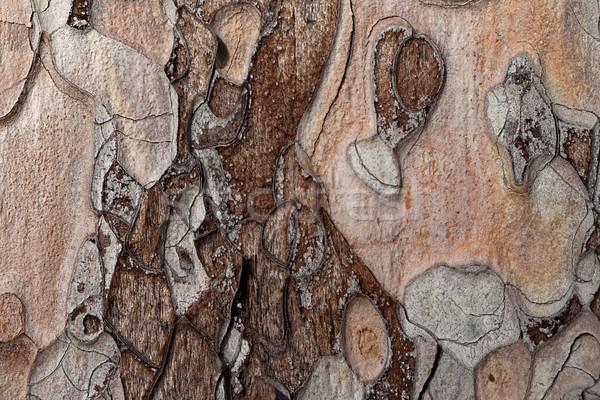 Ahşap doku çam ağacı görmek ahşap Stok fotoğraf © BSANI